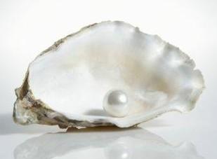 Eine offene Auster mit Perle